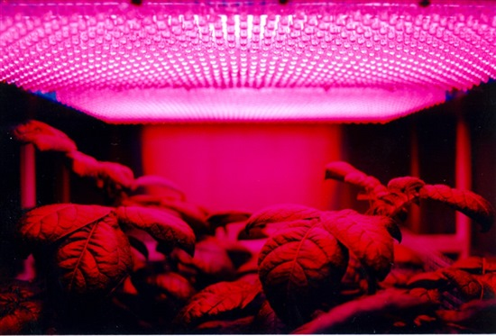 An LED grow light placed directly over plants.