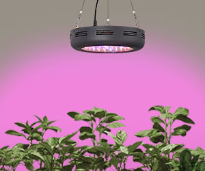 What are grow lights